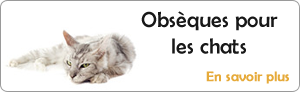 Obs�ques chats